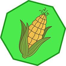 Насіння кукурудзи