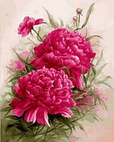 Картины по номерам 40×50 см. Пионы, фото 1