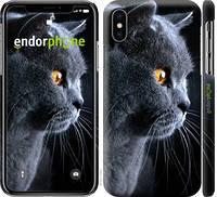 """Чехол на iPhone X Красивый кот """"3038c-1050-716"""""""