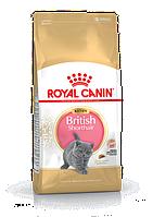 АКЦИЯ Сухой корм Royal Canin Kitten British для котят британской кошки, 2КГ + паучи 85 г., 3 шт