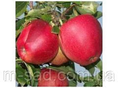 Яблоня Эвелина(скороплодный,поздний,сочный)