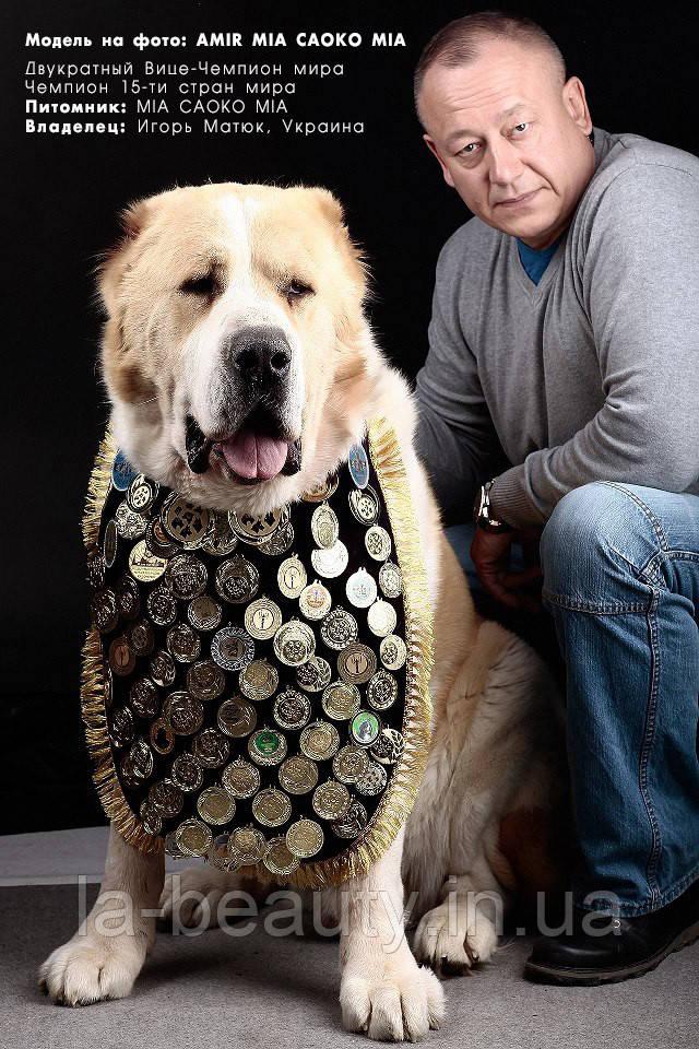 Нагрудник для нашивки медалей (наград) для собак черный с серебряной отделкой
