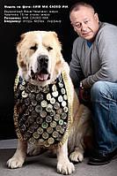 Нагрудник для нашивки медалей (наград) для собак черный с серебряной отделкой, фото 1