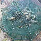 Верша-паук для ловли рыбы, фото 2