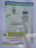 Семена огурца Атлантис F1 / Atlantis F1 (Бейо / Bejo) 250 сем — пчелоопыляемый, ранний гибрид (42-45 дней)