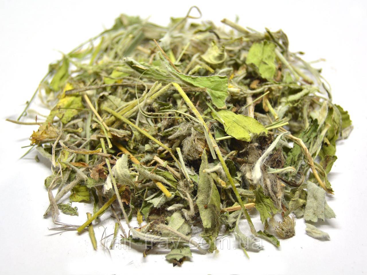 Ястребинка волосистая трава