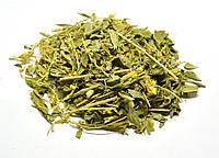 Золотарник обыкновенный трава