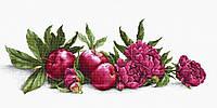 Набор для вышивания крестом Luca-s B2357 Пионы и красные яблоки