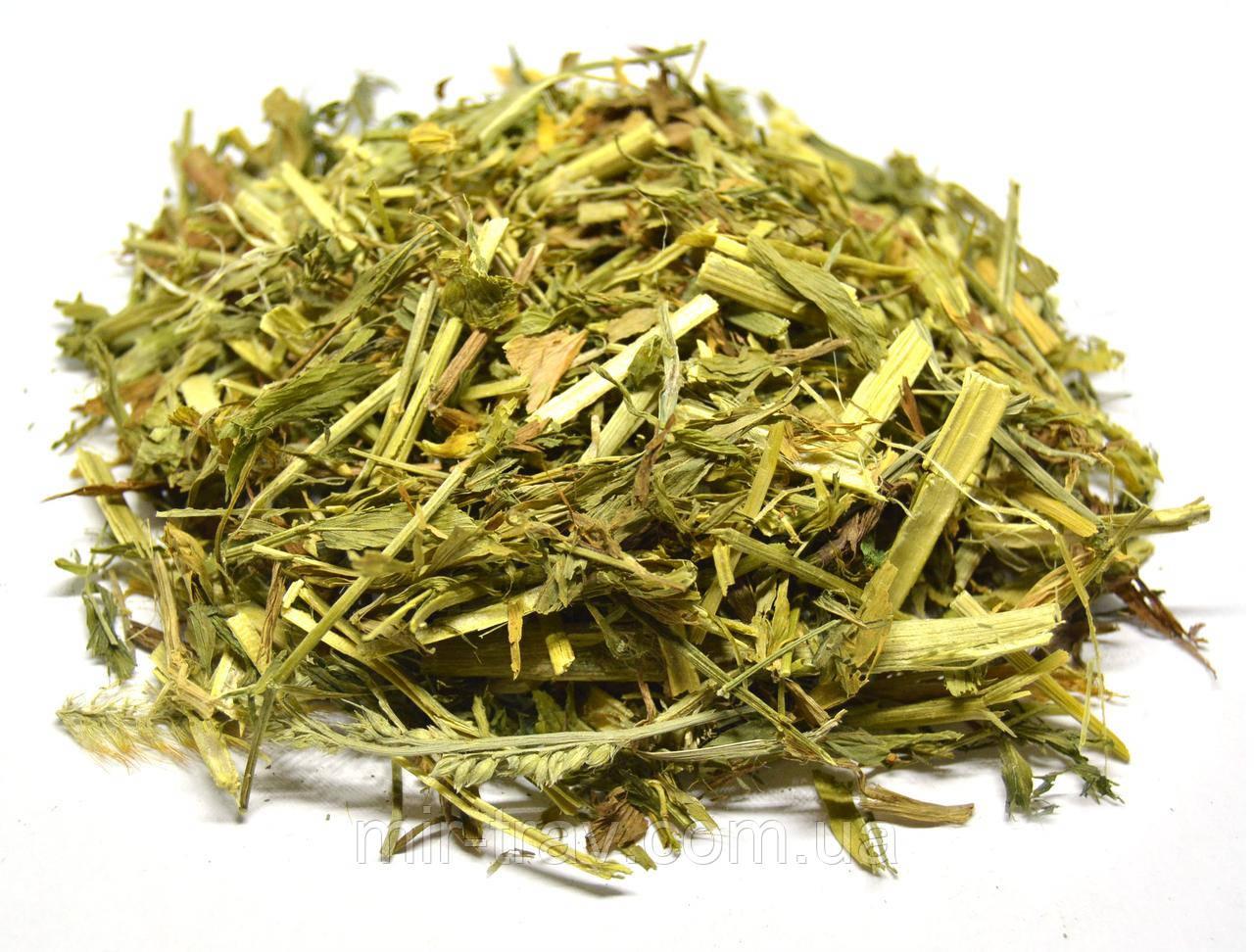 Галега лекарственная трава (козлятник лекарственный), фото 1