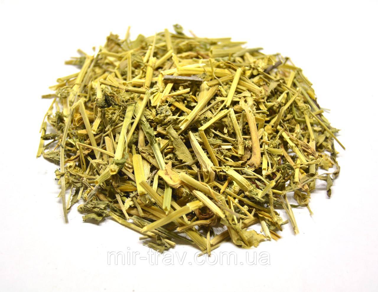 Фиалка трехцветная трава  (душистая, полевая)