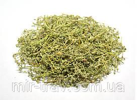 Грыжник голый трава (грыжник гладкий, кильник, остудник, собачье мыло)