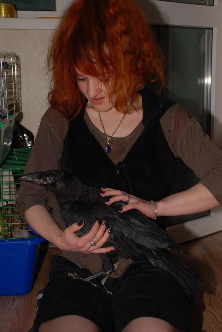 Ворон в аренду - «Планета животных» в Киеве