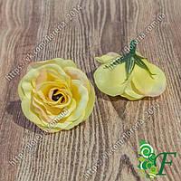 Головка розы Мускат желтый