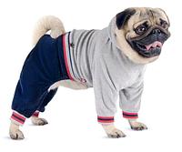 """Велюровый костюм """"ПАУЛЬ""""  для собак, размеры  XS,  S"""
