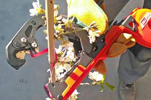 Як вибрати садовий степлер (тапінер для підв'язки рослин)