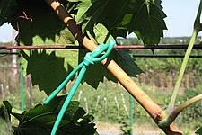 Як вибрати садовий кембрик (агрошнурок, агротрубку)