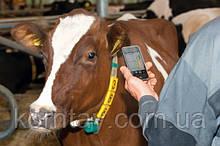 Программное обеспечение управления стадом Dairy Plan C21