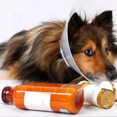 Гомеопатичні ветеринарні препарати