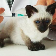 Вакцини для тварин