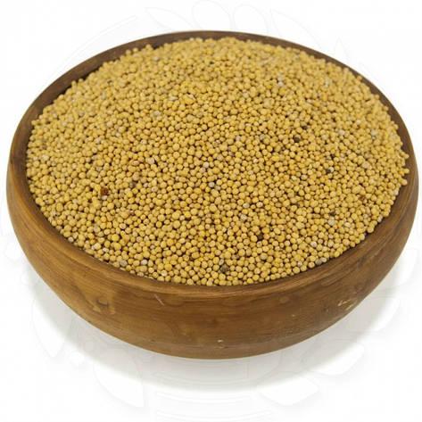 Горчица желтая органическая в пакете 0.5кг, фото 2