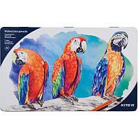 Карандаши цветные акварельные Kite. Металлический пенал 36 шт.