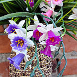 Нарцисс цветной пластик 45 см(5 шт.в уп), фото 3