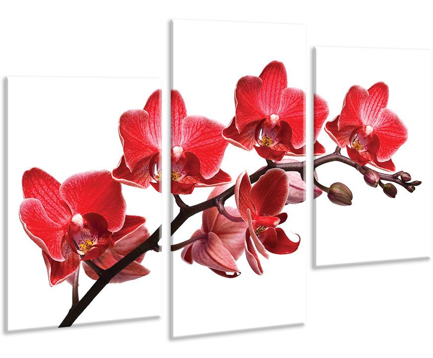 Модульная картина на холсте 96х70см Цветы