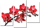 Модульная картина на холсте 96х70см Цветы, фото 2