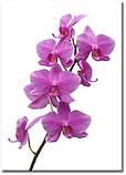 Картина на холсте 50 х 70 см Цветы, фото 2