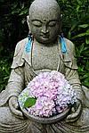 Гортензия - священный цветок Аудзисай