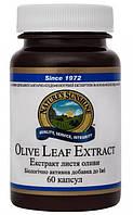 Листья оливы экстракт Olive leaf - 60 кап - NSP, США