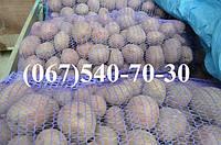 Картофель семенной Лаура