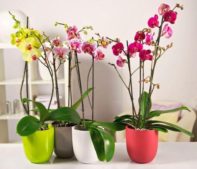 Методы полива орхидеи с помощью погружения в воду