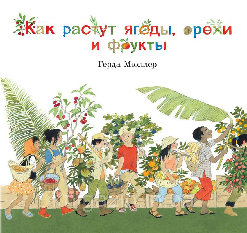 Книга для детей Как растут ягоды, орехи и фрукты Детям от 3 лет