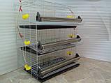 Годівниця для перепелів, курчат, фото 3