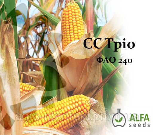 Семена кукурузы ЕС Трио ФАО 240