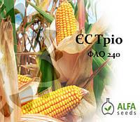 Семена кукурузы ЕС Трио ФАО 240, фото 1