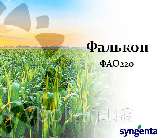 Кукуруза НК ФАЛЬКОН (ФАО 220) Сингента