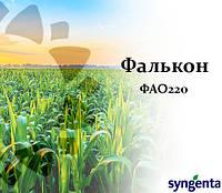 Кукуруза НК ФАЛЬКОН (ФАО 220) Сингента, фото 1