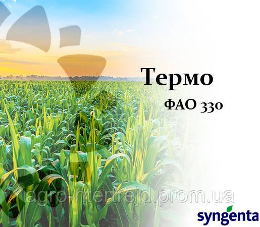 Кукуруза НК ТЕРМО (ФАО 330) Сингента