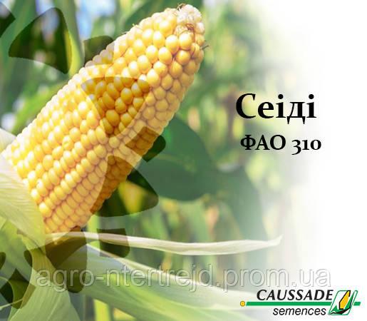 Кукуруза СЕИДИ (ФАО 310) Коссад Семанс