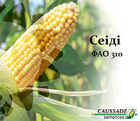 Кукуруза СЕИДИ (ФАО 310) Коссад Семанс, фото 1