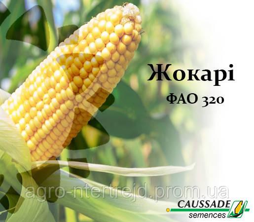 Кукуруза ЖОКАРИ (ФАО 320) Коссад Семанс