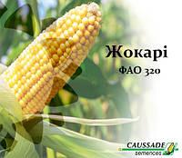 Кукуруза ЖОКАРИ (ФАО 320) Коссад Семанс, фото 1