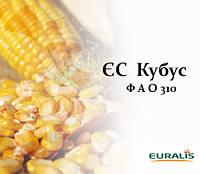 Кукуруза ЕС КУБУС (ФАО 310), фото 1