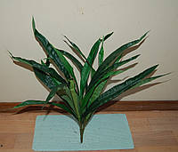 М-441 Куст узколист  23 листа 50 см