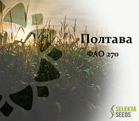 Семена кукурузы Полтава ФАО 270, фото 1