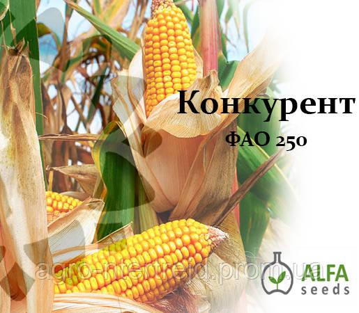 Семена кукурузы Конкурент ФАО 250