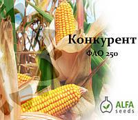 Семена кукурузы Конкурент ФАО 250, фото 1