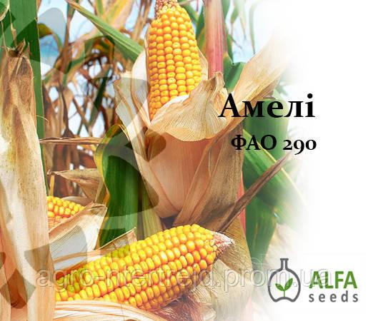 Семена кукурузы Амели ФАО 290
